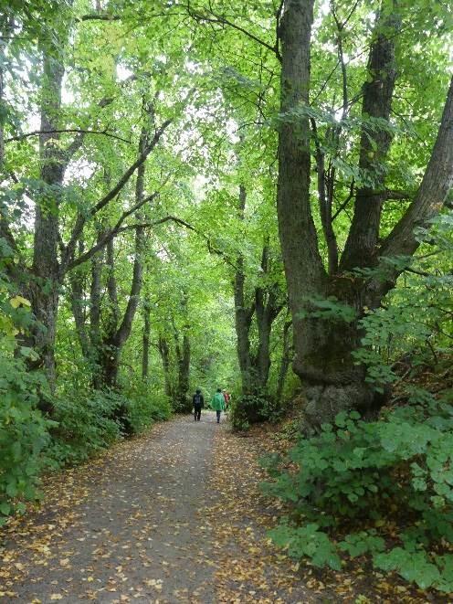 Metsäpolku Vallisaaressa