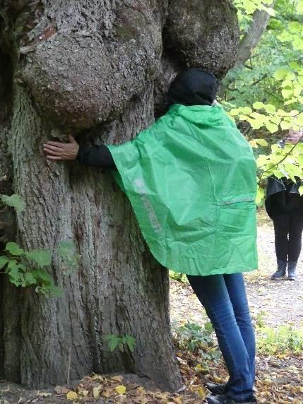 Leveä puu Vallisaaressa