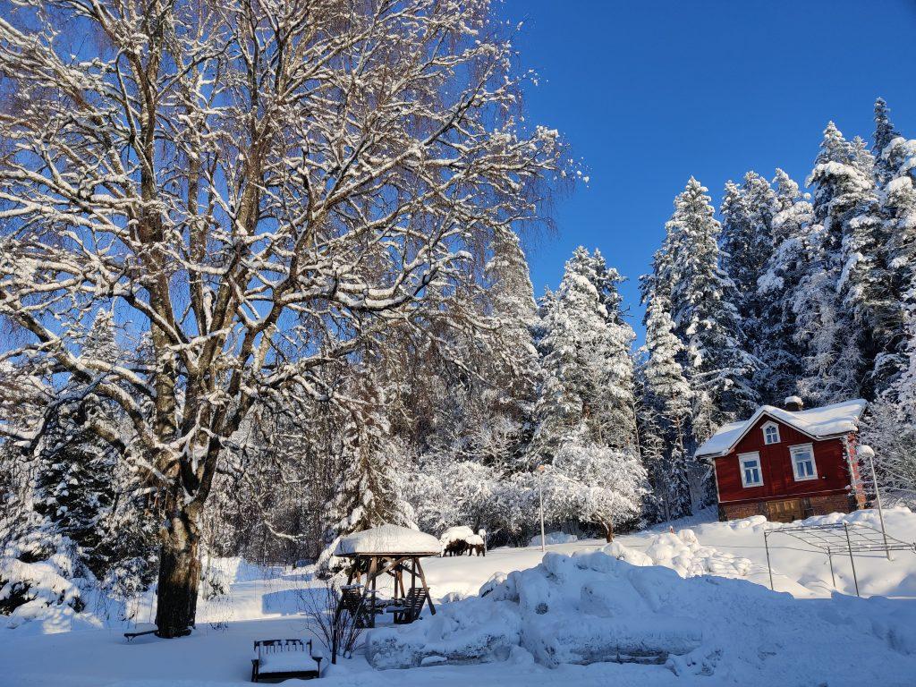 Luminen kuva Åvikin pihasta.
